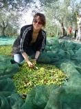 tra le olive